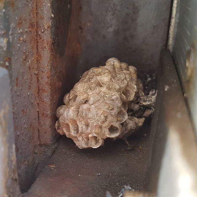 Это Ж не спроста! Из замочной скважины повылетали #осы #гараж #ужас // #wasp #garage #horrow